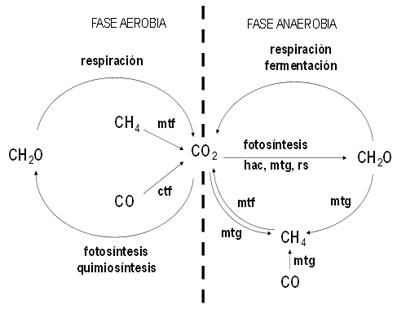 El ciclo del carbono en la biosfera