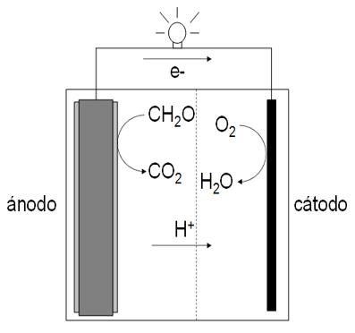 Biocélula de combustible