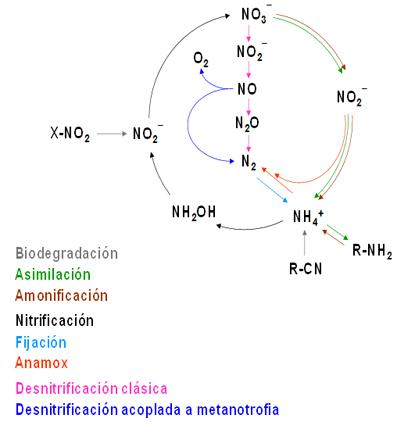 Visión actualizada del ciclo del nitrógeno en la biosfera