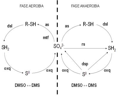 El ciclo del azufre en la bisfera