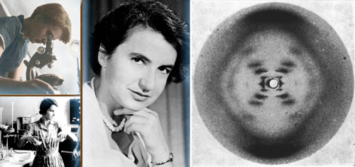 Rosalind Franklin and her X-ray image confirming the helical structure of DNA shown to Watson without her approval or knowledge. Although this image and her analysis provided valuable insight into the structure of DNA, Franklin's scientific contributions to the discovery of the double helix are often overlooked.