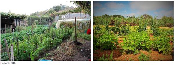 Huertos tradicionales donde aún se cultivan variedades locales de leguminosas