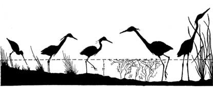 Aves acuáticas en La Camarga