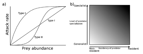 Three types of functional responses (i.e. the relationship between the attack rate of a predator and the abundance of its prey) of predators (a), and the consequences of predator specialization and the residency of predators on the demographic stability of prey population (b, a darker shade indicates a greater degree of destabilizing effects)
