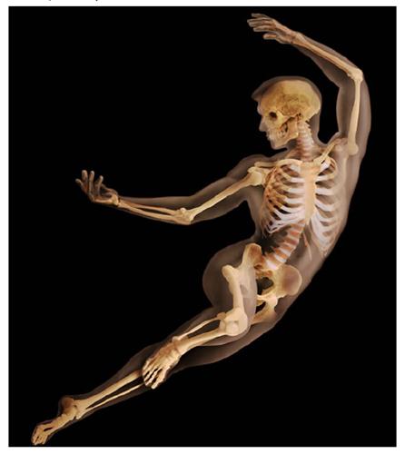 A. Tsiaras, Anatomical Travelogue/The Visual MD©, El esqueleto revelado