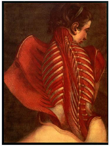 J.-F. Gautier d'Agoty, El ángel anatómico, 1746