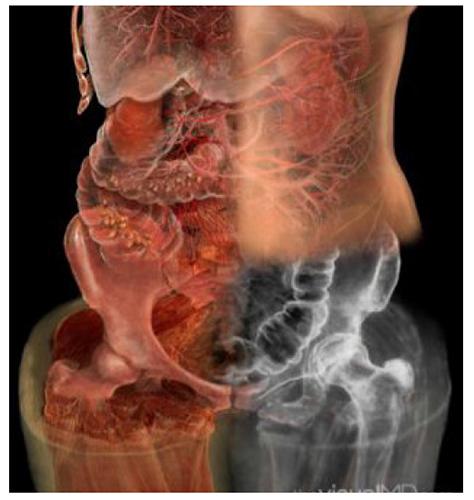 A. Tsiaras, Anatomical Travelogue/The Visual MD©, Cuatro sistemas