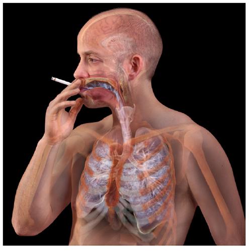A. Tsiaras, Anatomical Travelogue/The Visual MD©, Inhalar