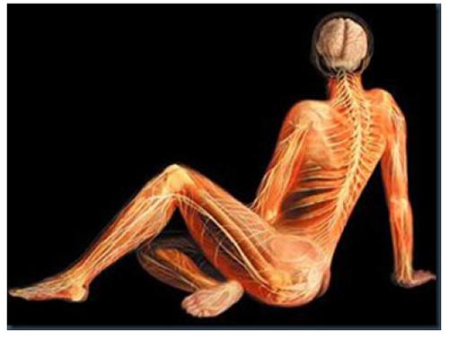 A. Tsiaras, Anatomical Travelogue/The Visual MD©, Reposo