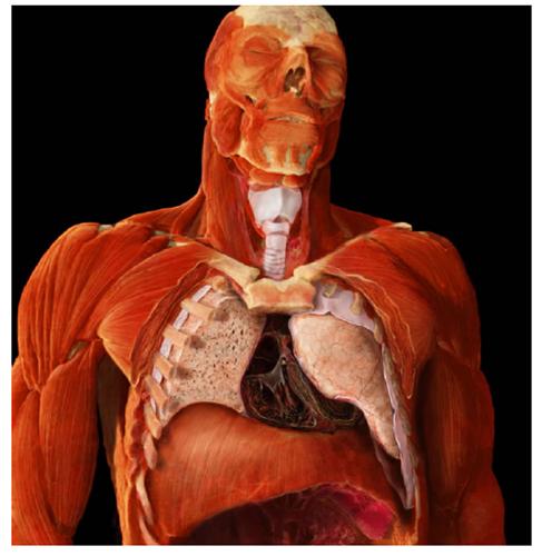 A. Tsiaras, Anatomical Travelogue/The Visual MD©, El sistema respiratorio