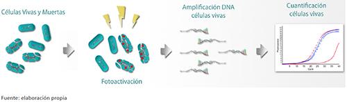 Esquema de amplificación de bacterias viables no cultivables utilizando tintes que se adhieren al DNA