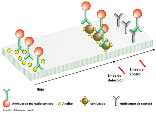 Esquema simplificado de una tira inmunocromatográfica competitiva
